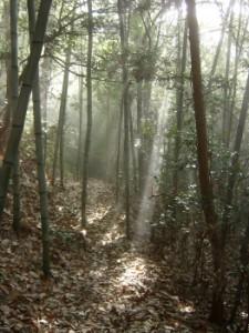 山への散歩道